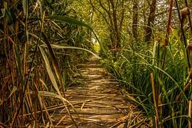 swamp-1706114__180